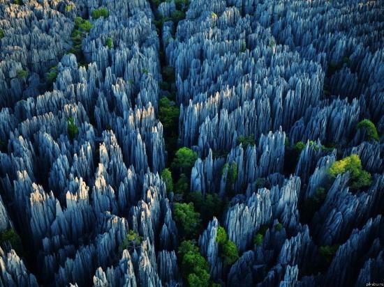 Каменные джунгли