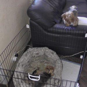 Лиза и Монины щеночки