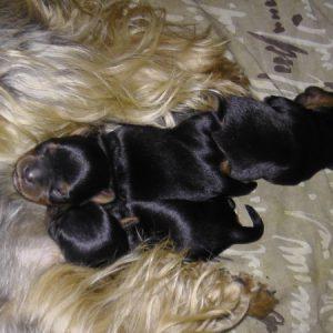 Моня с детками спит