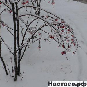 Природа плачет от такой погоды