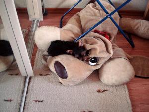 Появился щенок