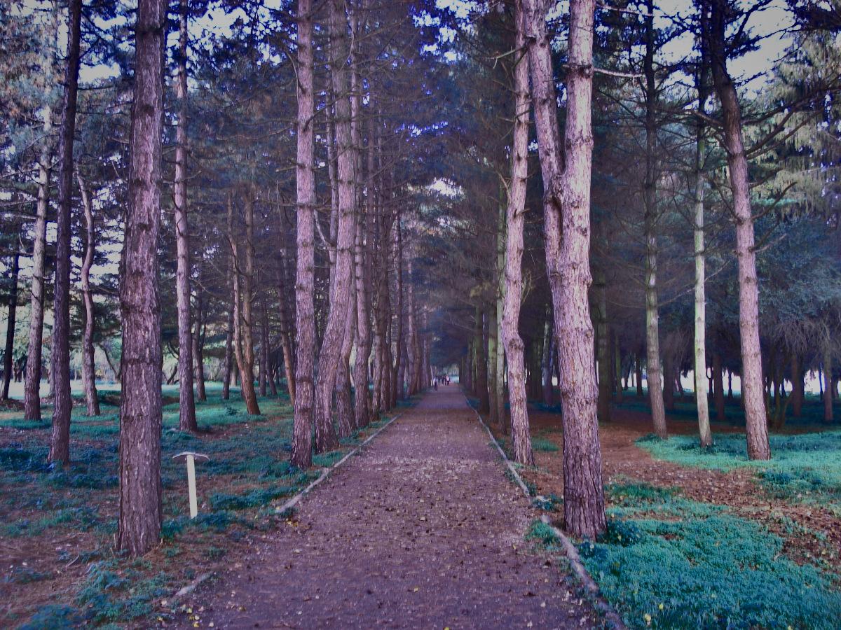 Парк в Долинске город Нальчик